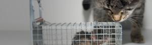 Deratyzacja - Z gryzoniami nie ma żartów – ich pojawienie się w naszym otoczeniu oznacza kłopoty, przed którymi uchronić może szybko i skutecznie przeprowadzona deratyzacja....