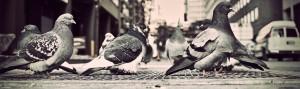Zabezpieczanie budynków przed ptakami - Towarzystwo ptaków, oprócz wielu korzyści, które za sobą niesie, ma w sobie też negatywne strony. Odchodami i piórami potrafią niszczyć piękne i zabytkowe budynki, przenoszą też choroby....