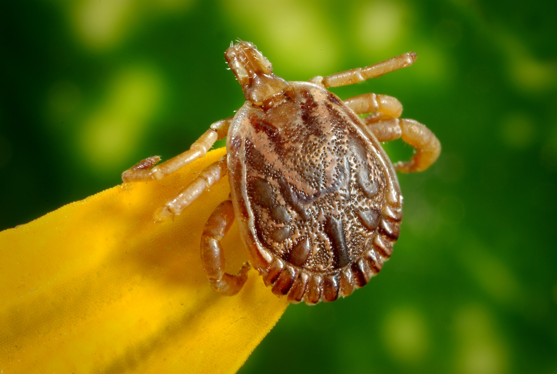Kleszcze. Mały pasożyt. Wielkie niebezpieczeństwo. Obalamy mity!